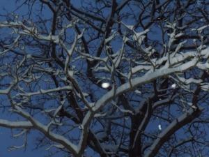 First snow 2013 008